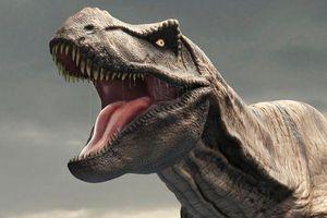 Khoảng 2,5 tỷ con khủng long T-rex từng sống trên Trái Đất