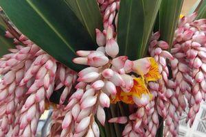 Bất ngờ loại hoa lan hệt như bông lúa, dân buôn bán cả nghìn cành