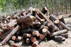 Công an điều tra thông tin 'đoàn xe chở gỗ về xưởng ở huyện Chư Prông'