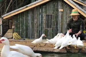 Showbiz 16/4: Tài tử Triệu Văn Tuyên giã từ sự nghiệp về quê nuôi vịt