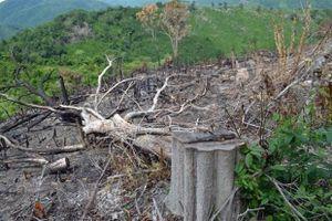 Phú Yên: Khởi tố 5 cán bộ liên quan đến vụ mở đường phá rừng giáp ranh