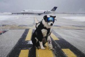 Hàng không 'đứng ngồi không yên' vì chó thả rông gần khu bay
