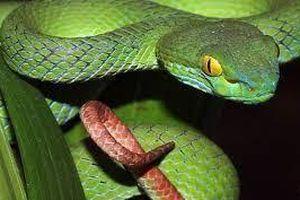 Cẩn trọng khi trẻ nhỏ bị côn trùng, rắn cắn