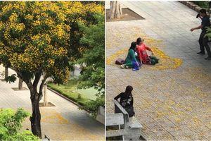 Sân trường vào mùa hoa rụng, thầy cô giáo hồ hởi 'sống ảo' khiến giới học trò vô cùng thích thú