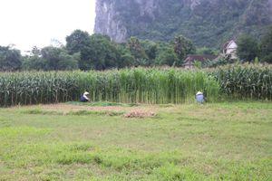 Vì sao phong trào xây dựng nông thôn mới ở Tuyên Hóa có dấu hiệu chững lại?