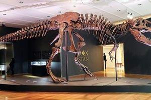 'Giật mình' số lượng khủng long bạo chúa từng sống trên Trái đất