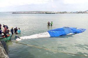 Lụy ngoài khơi, cá voi dài 15 m được đưa vào bờ