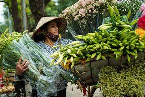 Hoa loa kèn tháng 4 ở thủ đô Hà Nội