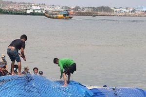 Bình Thuận: Cá voi nặng gần 10 tấn, dài 15m lụy ngoài khơi được đưa vào bờ