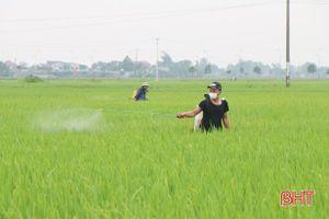 Thời tiết mưa ẩm 'làm khó' nông dân Hà Tĩnh trong phòng trừ đạo ôn cổ bông hại lúa
