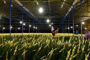 Lâm Đồng ban hành quy chế tạm thời về quản lý du lịch canh nông