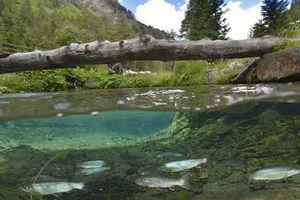 Vẻ đẹp huyền ảo của công viên bị nước nhấn chìm ở Áo