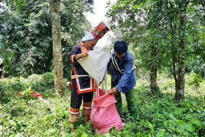 Bình Liêu chuyển động từ tài nguyên rừng