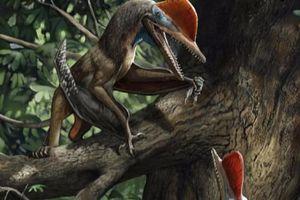 'Quái thú bay' kỷ Jura mang trên cơ thể thứ giống con người