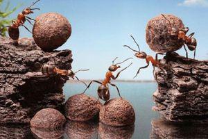 Lý giải khả năng 'bất tử', rơi từ nóc nhà không chết của loài kiến