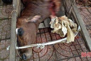 Bắt quả tang hộ dân giết mổ bò 'chui', không rõ nguồn gốc ở Hương Sơn