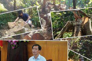 Phá rừng ở Thừa Thiên-Huế: Nếu nghiêm trọng sẽ khởi tố răn đe!