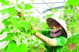 Khơi dậy tiềm năng phát triển nông nghiệp quy mô lớn, ứng dụng công nghệ cao ở huyện Hoằng Hóa