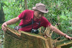 Nhức nhối nạn phá rừng tại rừng A Lưới