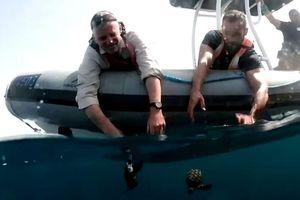 Thả rùa trở lại biển sau vụ tràn dầu