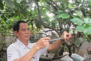 'Phù thủy' ghép thành công hàng chục giống cây