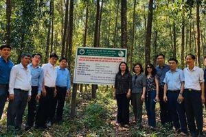Công nghệ sinh học nâng cao năng suất rừng trồng gỗ lớn