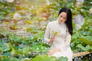 Cánh đồng mênh mông sen trắng ở Hà Nội vào mùa, thu hút giới trẻ check-in