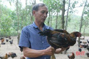 Giá gà tăng cao lại dễ bán, người chăn nuôi Hà Tĩnh phấn khởi
