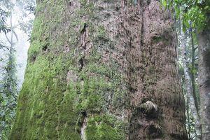 Vườn quốc gia Pù Mát - Hướng tới Vườn di sản ASEAN