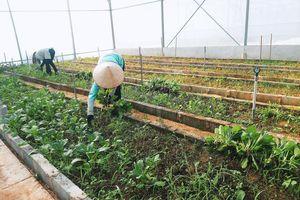 Việt Nam xuất khẩu 4 tỷ USD rau quả, đã đến lúc cần hình thành sản xuất 'có trách nhiệm' để vươn tầm thế giới