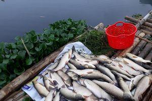 Quan Hóa (Thanh Hóa): Thêm một đơn vị xả thải trái phép trên sông Mã bị phát hiện