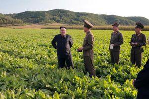 Nhập khẩu hàng hóa từ Trung Quốc vào Triều Tiên tăng mạnh