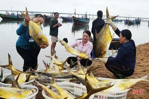Hải sản được giá, ngư dân Hà Tĩnh phấn khởi vào vụ cá nam