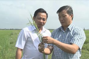 Quảng Bình khẩn trương phòng, chống bệnh đạo ôn trên lúa