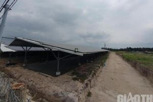 Lãnh đạo Bình Định: Không để phát triển điện mặt trời ồ ạt theo phong trào