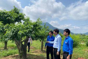 Nguồn vốn hỗ trợ thanh niên khởi nghiệp phát huy giá trị trên địa bàn huyện Nông Cống, Như Thanh