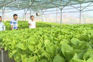 Trung tâm Giáo dục - Dạy nghề huyện Bố Trạch: Triển khai thành công mô hình thực nghiệm nông nghiệp công nghệ cao