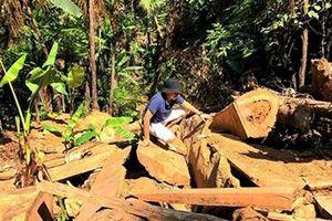 Gia tăng các vụ phá rừng ở địa bàn giáp ranh