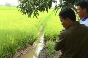 Đi cắm lại mốc giới ruộng lúa, người đàn ông dính bẫy diệt chuột tử vong
