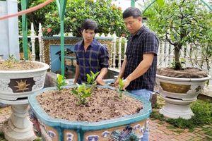 Nhiều nhà vườn ở Sa Đéc đau đầu với nạn mất trộm hoa kiểng quý