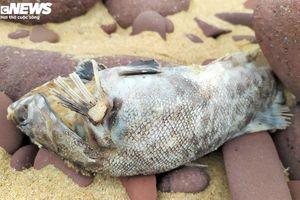 Cá chết ở biển Nghi Thiết, Nghệ An: Mẫu cá thu thập không đủ để phân tích