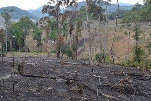 Khởi tố 2 đối tượng về hành vi 'hủy hoại rừng'