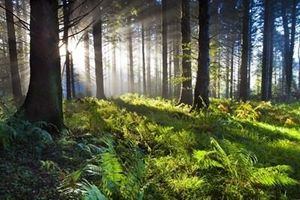 Thay đổi mối quan hệ giữa con người với thiên nhiên