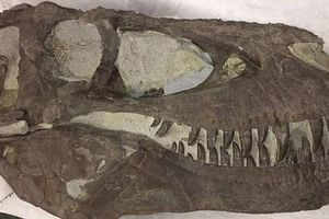 Phát hiện mộ tập thể của 'khủng long - sói' khủng khiếp nhất mọi thời đại