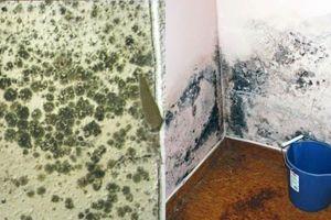 Nấm mốc khắp nhà, làm ngay cách này để không hít phải độc