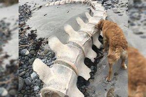 Bộ xương bí ẩn được tìm thấy ở Scotland là của quái vật hồ Loch Ness?