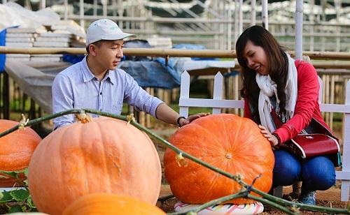 Lâm Đồng: Điểm du lịch canh nông không được kinh doanh dịch vụ lưu trú tại chỗ