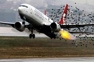 Chim va làm vỡ ống dầu thủy lực máy bay