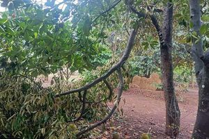 Lốc xoáy gây thiệt hại khoảng 20 tỷ đồng ở Bình Phước