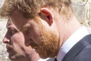 Hoàng tử Harry 'sợ' nhìn vào mắt anh trai - Hoàng tử William